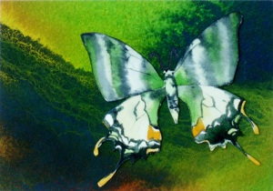 "Color Butterfly Artist Trading Card by Elaine Frenett Measures 2.5"" x 3.5"" ATC"